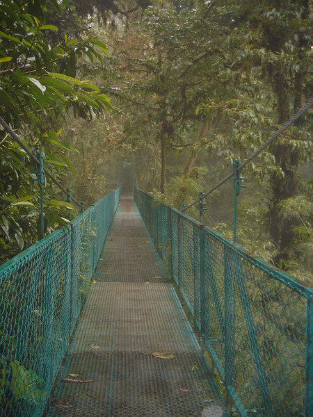 suspension bridges in the cloud forest.  you can walk on the bottom, the middle or on top of the forest.