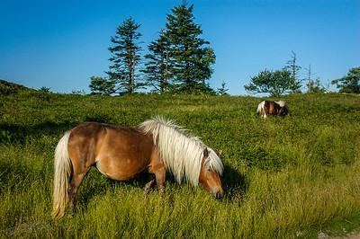 Mount Rogers, Virginia