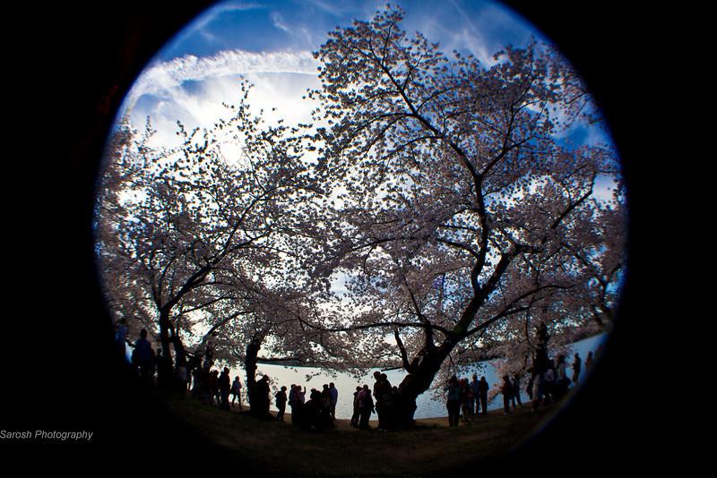 CherryBlossomSP-26.jpg