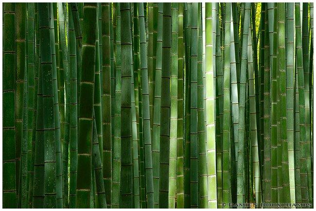 Arashiyama Bamboo Grove image copyright Damien Douxchamps