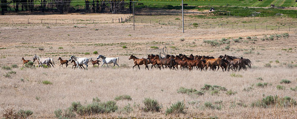 Ranch38-3114.jpg
