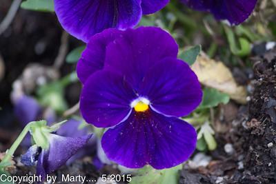 Flowers 5-16-15