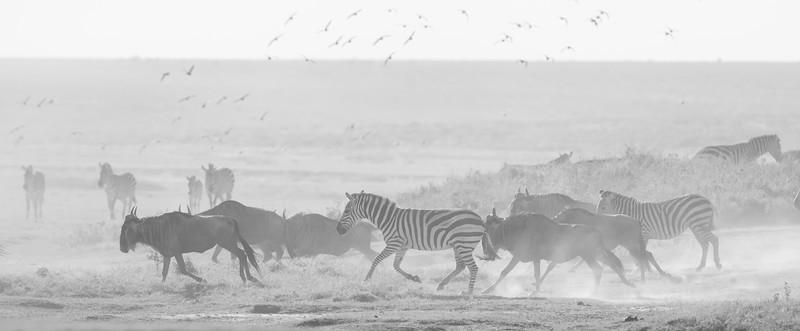 Tanzania_Feb_2018-357.jpg