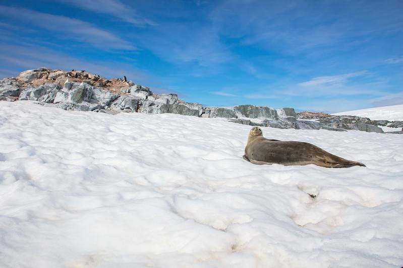 Seal Antarctica F6A68-6888.jpg