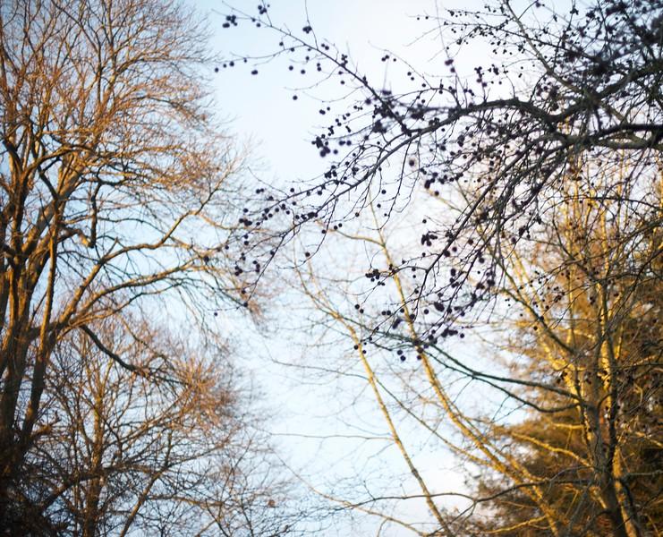 Autumn Trees.jpg