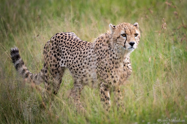 Safari-Ngorongoro Crater and Serengeti National Park, Tanzania