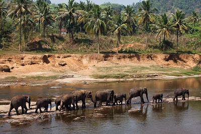 Sri Lanka - March 2010