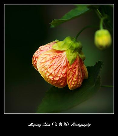 Unknown flower-18