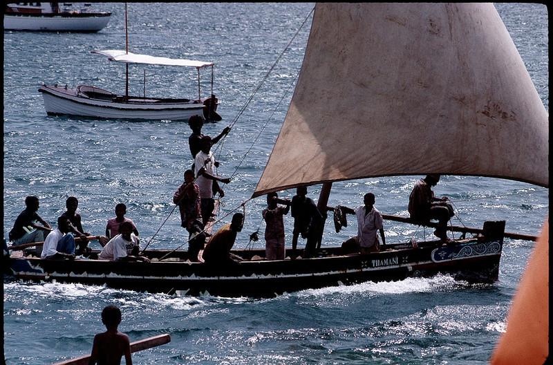 Lamu dhow races