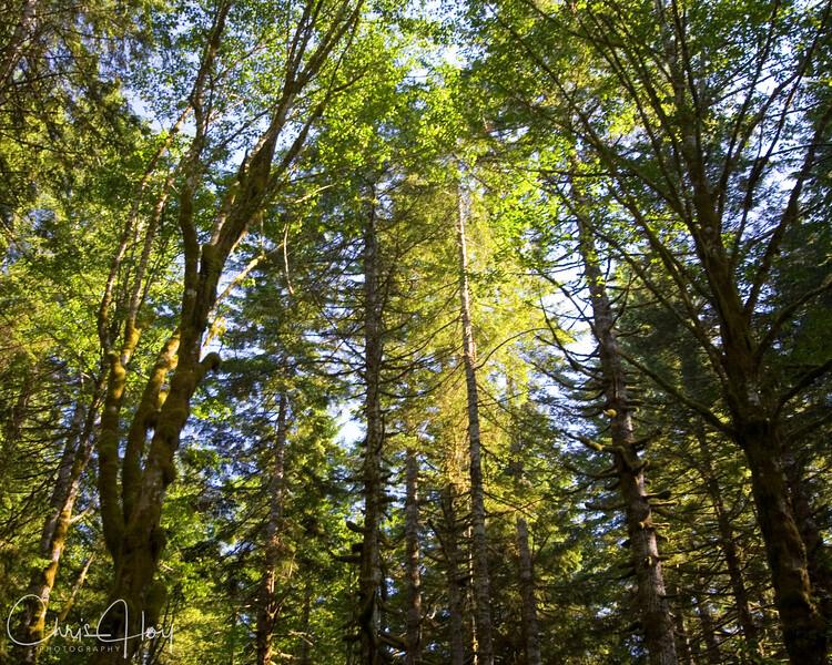 Trees Trees Trees.jpg