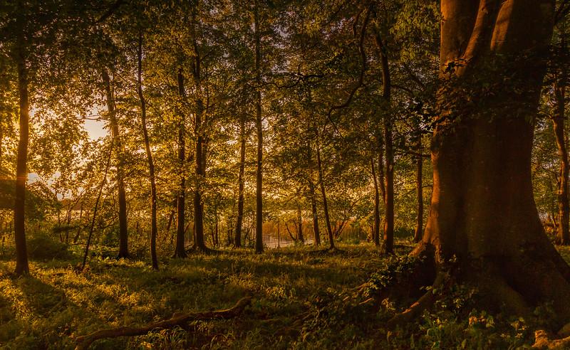 Forest Shadows-110.jpg