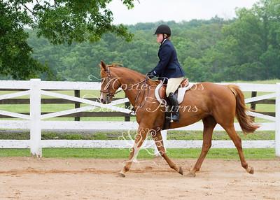 Pleasure Hunter and Beginner Rider Under Saddle
