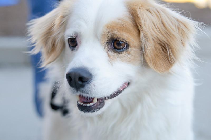 20110312 PetSmart Adoption Event-65.jpg