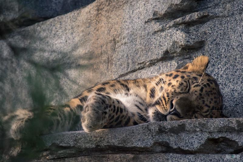 leopard 001.jpg