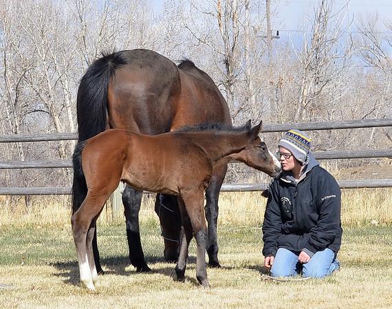 2012 Royal Quik Frenchman Foals
