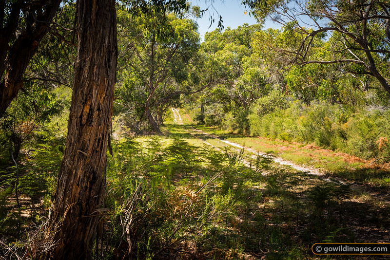 The Pinnacles walking track, French Island NP