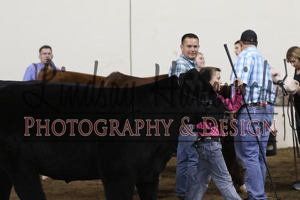 Market Steers - In Coliseum