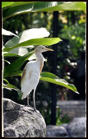 Kuala Lumpur Bird Park, Oct 2013