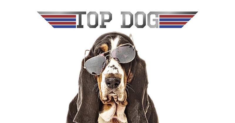 Top Dog fb ad.jpg