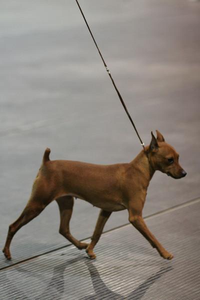 Renaissance Dog Show April 2010
