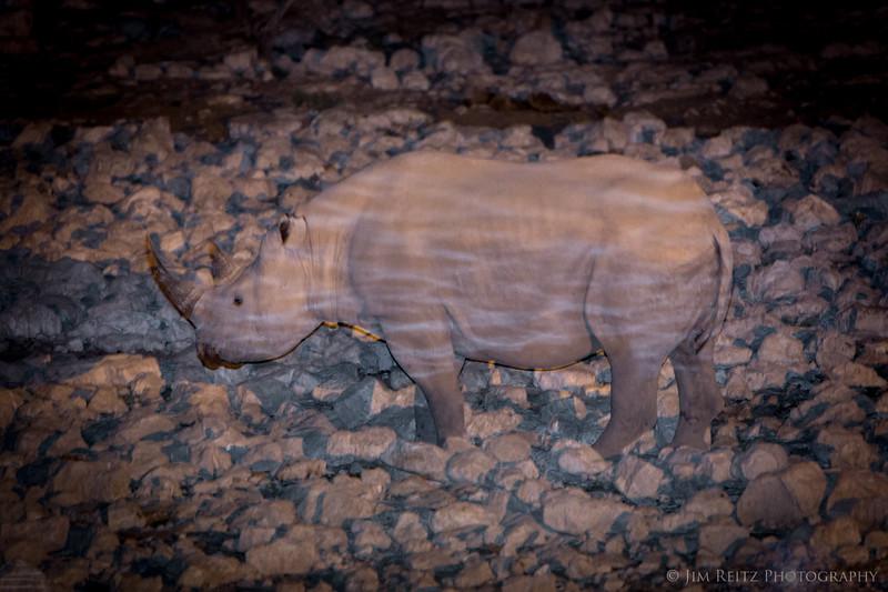 Black Rhino at the water hole - Etosha National Park, Namibia.
