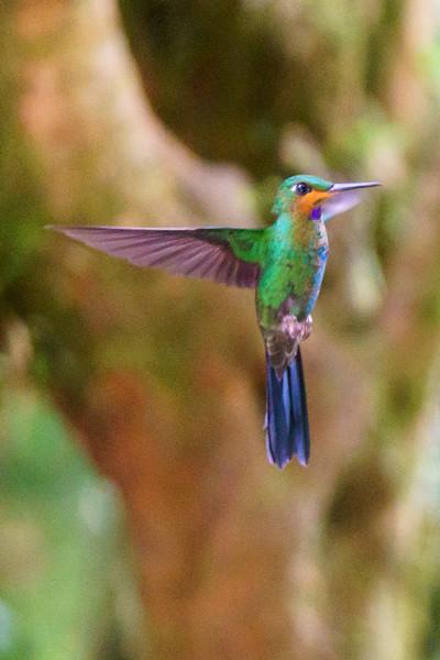 Costa Rica 2015-3062.jpg