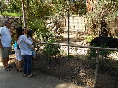 Birthday at the LA Zoo