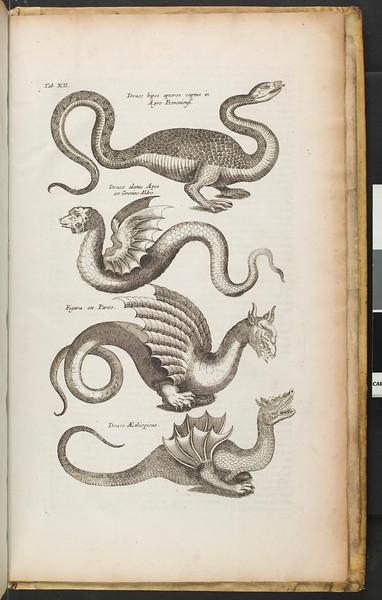 Historiae naturalis de quadrupetibus [sic] : [de avibus