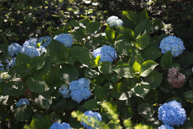 2009 06 30_NY Botanical Gardens_0674.jpg