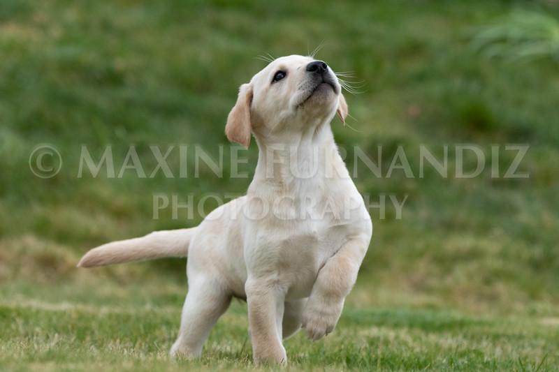 Weika Puppies 24 March 2019-6702.jpg