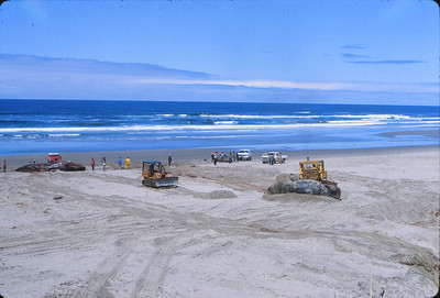 1979 Florence, OR: 41 Beached Whales