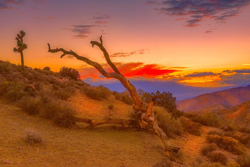 Joshua Tree Trip-436-3-2.jpg
