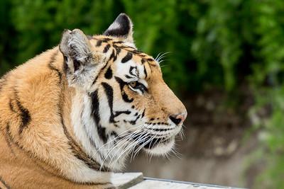 Oakland Zoo Portraits