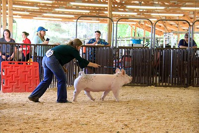 Market Swine Final Drive Sunday