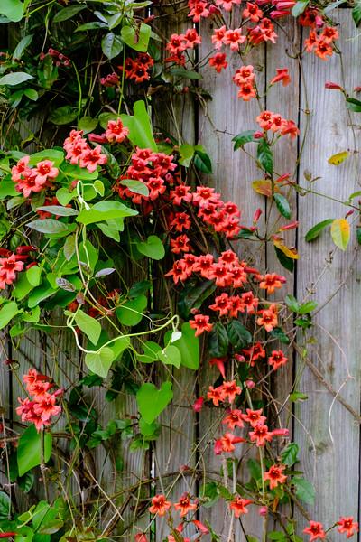 20180512 Green Spring Garden 020.jpg