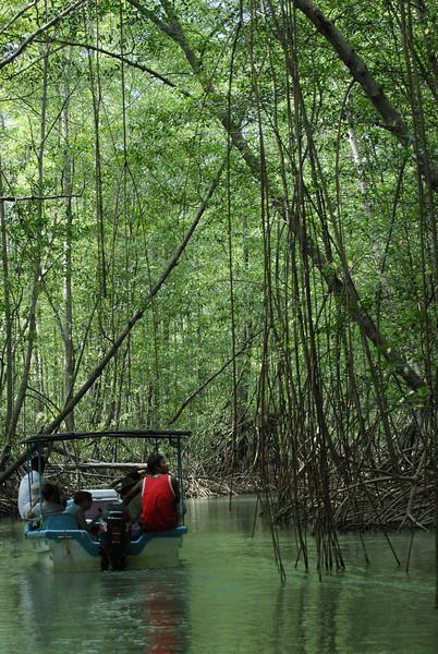080119 9604 Costa Rica - Manuel Antonio - Mangroves Boat Tour _E _L _G ~E ~L.JPG