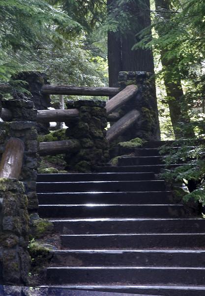 Stepping-Lightly_DSC1821.jpg