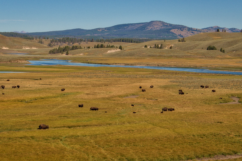 Yellowstone Day 4 R--7.jpg