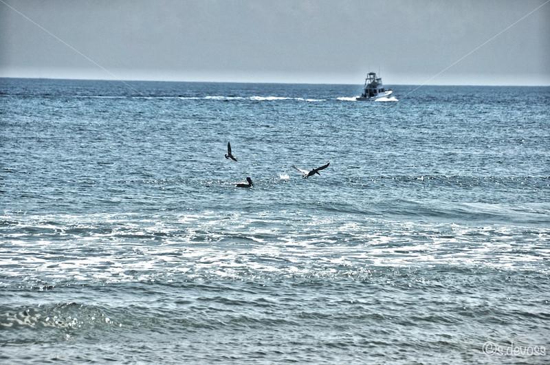 beachPeaislandHDR_0139 smWm.jpg