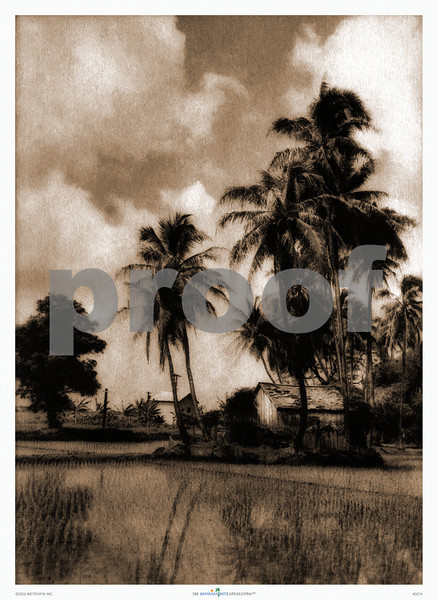 307: 'Rice Paddy, Oahu' Photograph. Ca. 1926 (PROOF watermark will not appear on your print)