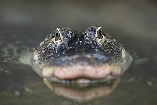 Reptilia 2012