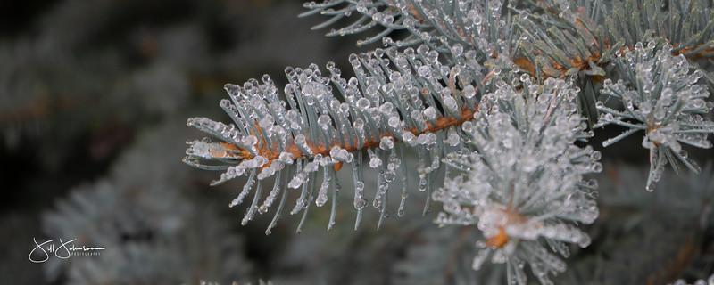 ice-01683.jpg