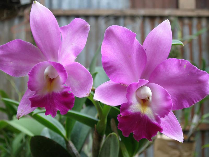 *CR_Orchids.jpg