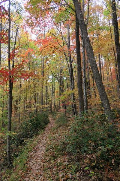 Farlow Gap Trail -- 3,860'