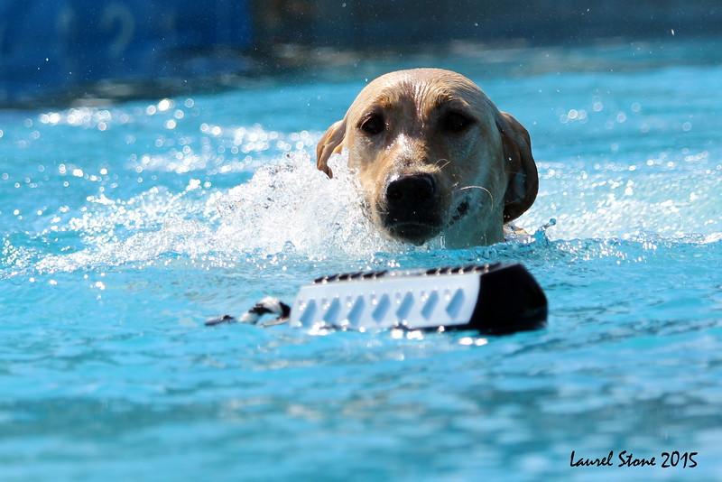 2015.8.5 Winnebago County Fair Dock Dogs (45).JPG