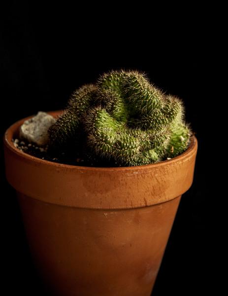 cactus-8817.jpg