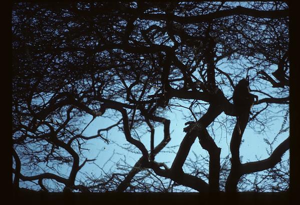 1978 - Kenya