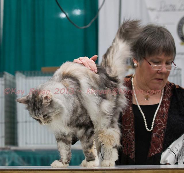 CatShow2014028_1.jpg