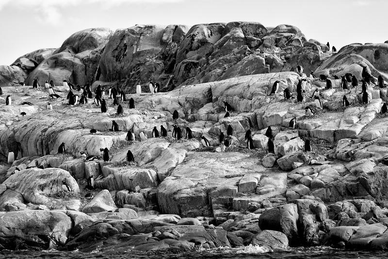 _MG_7496_20170122_Antarctica-Edit.jpg