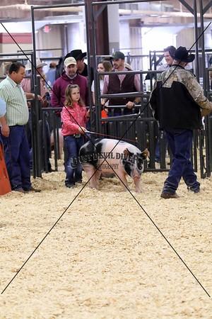 Swine VI